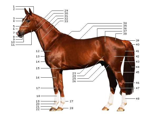 Teste dein Pferdewissen ...
